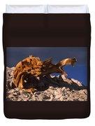 Bristlecone Pine - White Mountains Duvet Cover