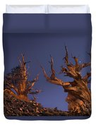 Bristlecone Pines At Sunset With A Rising Moon Duvet Cover