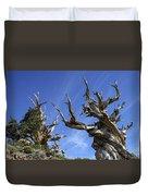 Bristlecone Trees Duvet Cover