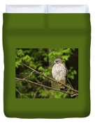 Broad Winged Hawk On The Lookout Duvet Cover