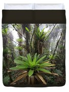 Bromeliad Bromeliaceae And Tree Fern Duvet Cover
