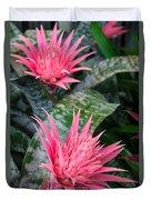 Bromeliad Plant 3 Duvet Cover