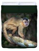 Brown Capuchin Monkey Cebus Apella Duvet Cover