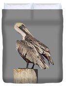 Brown Pelican - Preening - Transparent Duvet Cover