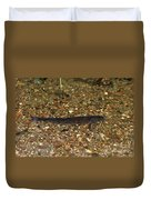 Brown Trout Duvet Cover