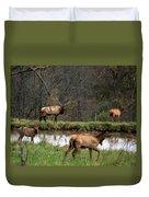 Buck In Wilderness Duvet Cover
