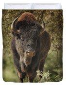 Buffalo Bull II Duvet Cover