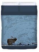 Bugling Bull Elk, Alberta Canada Duvet Cover