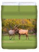 Bull And Cow Elk - Rutting Season Duvet Cover