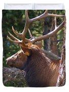 Bull Elk 2 Duvet Cover