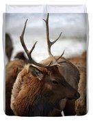 Bull Elk At Hardware Ranch 2 Duvet Cover