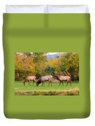 Bull Elk  Bugling With Cow Elks - Rutting Season Duvet Cover
