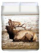 Bull Elk Calls Out Duvet Cover