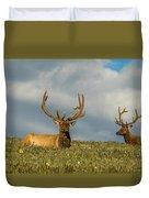 Bull Elk Friends For Now Duvet Cover