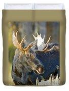 Bull Moose Up Close Duvet Cover