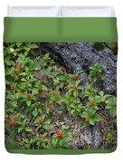 Bunchberry Berries Duvet Cover