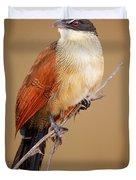 Burchell's Coucal - Rainbird Duvet Cover