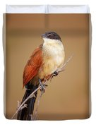 Burchell's Coucal - Rainbird Duvet Cover