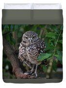 Burrowing Owl Color Version Duvet Cover