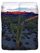 Cactus Sun Beam Duvet Cover