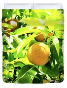 California Bright Orange Fruit Tree In Downtown Sacramento In Ca Duvet Cover