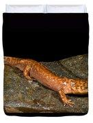 California Giant Salamander Duvet Cover