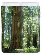 California Redwood Forest Trees Art Prints Duvet Cover