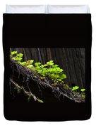 California Redwoods 4 Duvet Cover