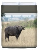 Cape Buffalo Eating Grass In Queen Elizabeth National Park, Ugan Duvet Cover