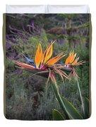 Captivating Bird Of Paradise In Full Bloom Duvet Cover