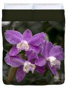 Cattleya Loddigesii Var. Puntata  'marisa 3'  0831 Duvet Cover