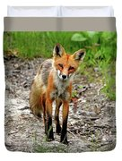 Cautious But Curious Red Fox Portrait Duvet Cover