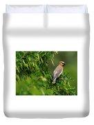 Cedar Waxwing #1 Duvet Cover