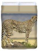 Cheetah Acinonyx Jubatus On Termite Duvet Cover