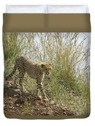 Cheetah Exploration Duvet Cover