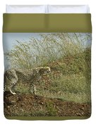 Cheetah On The Prowl Duvet Cover
