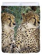 Cheetah Pair Duvet Cover