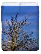 Centenary Chestnut At Blue Hour Duvet Cover