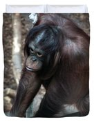 Chimpanzee Duvet Cover