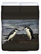 Chinstrap Penguin Duo Duvet Cover
