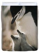 Chinstrap Penguin Pygoscelis Antarctica Duvet Cover by Tui De Roy