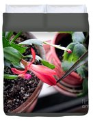 Christmas Cactus Bloom Duvet Cover