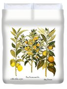Citron And Orange, 1613 Duvet Cover