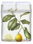 Citrus Bergamot Duvet Cover by Margaret Ann Eden