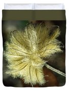 Clematis Seed Head 1 Duvet Cover