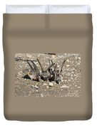 Cliff Swallows Gather Mud Duvet Cover