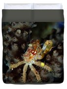 Clinging Crab On Sea Rod Duvet Cover