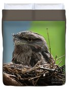 Close Up Look At A Tawny Frogmouth Sitting In A Nest Duvet Cover