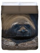 Close-up Of Elephant Seal Looking At Camera Duvet Cover