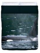 Close-up Of Killer Whale In Johnstone Duvet Cover